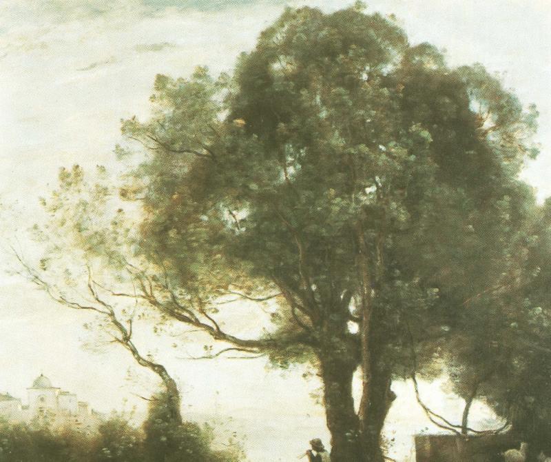 Wunder der Natur: Bäume