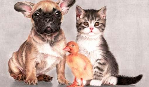 Hund und Katze, des Menschen beste Freunde mit Farbstiften portraitieren